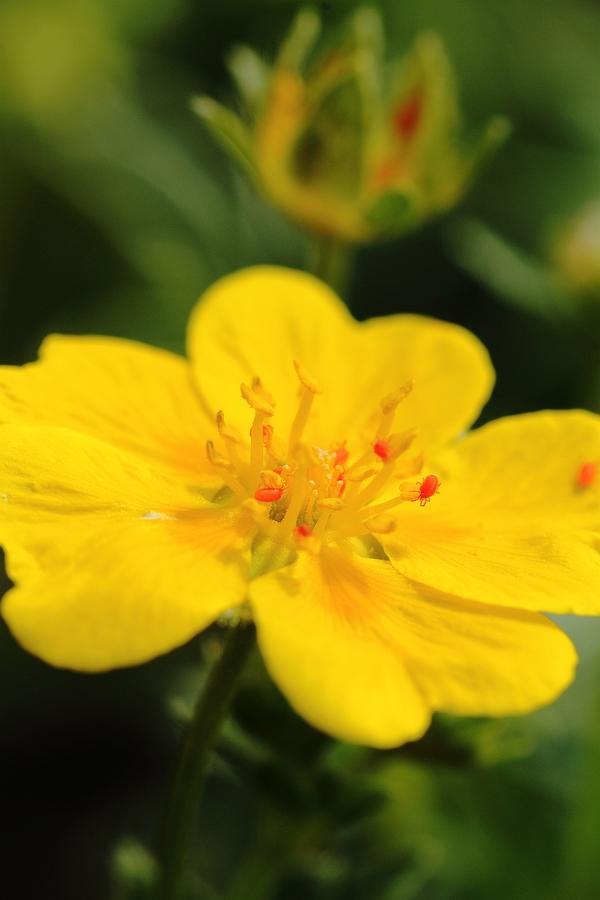 9_Hoefats_Flora+Fauna.jpg